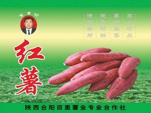 合阳县百里薯业