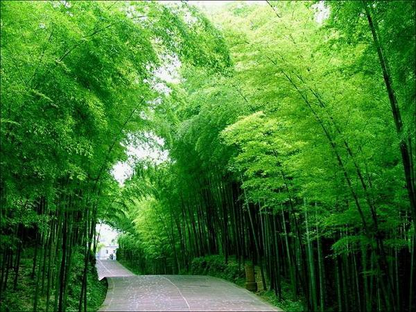 [贴图]竹韵