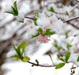 酒泉春天的雪