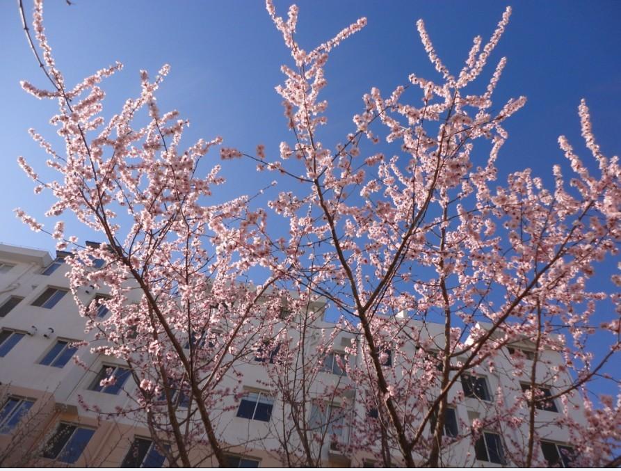 春天的花儿们