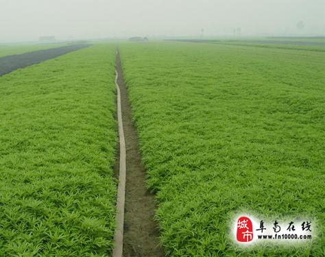 内容摘要:       新村镇位于阜南县西北部,西与临泉县土坡乡为邻,北与