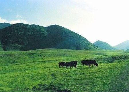 重庆市巫溪县东北部,东靠神农架原始森林,属阴条岭自然保护区的实验区