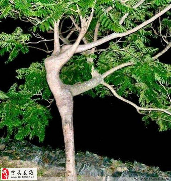 树木也性感~自然的力量!让您感受大自然的
