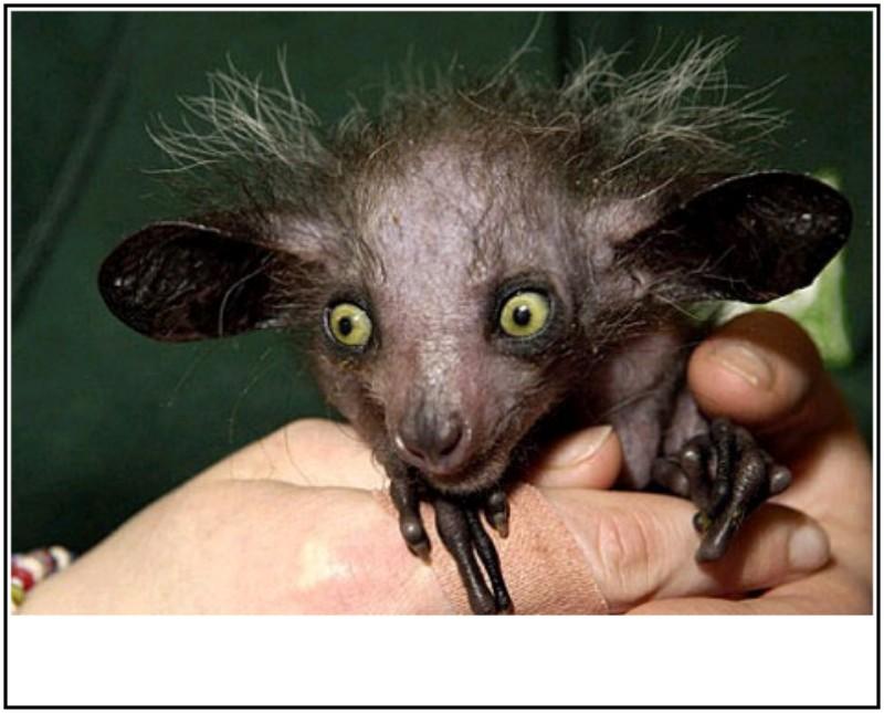 [分享]世界上最丑陋的13种动物