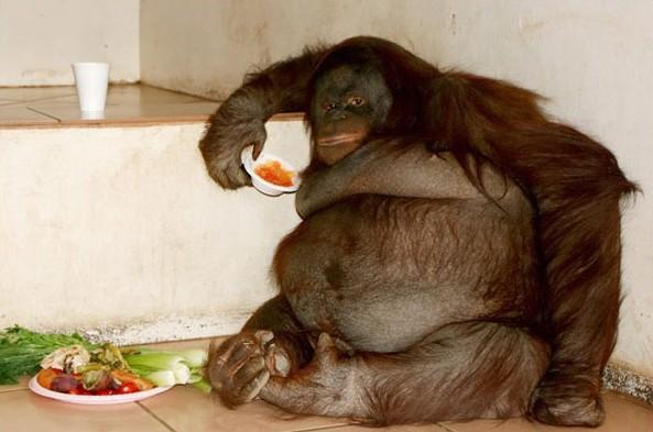 世界十大最胖动物_奇闻轶事