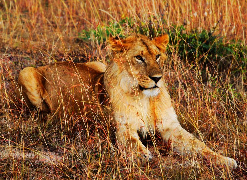 [原创]走进非洲--马赛马拉草原拍野生动物