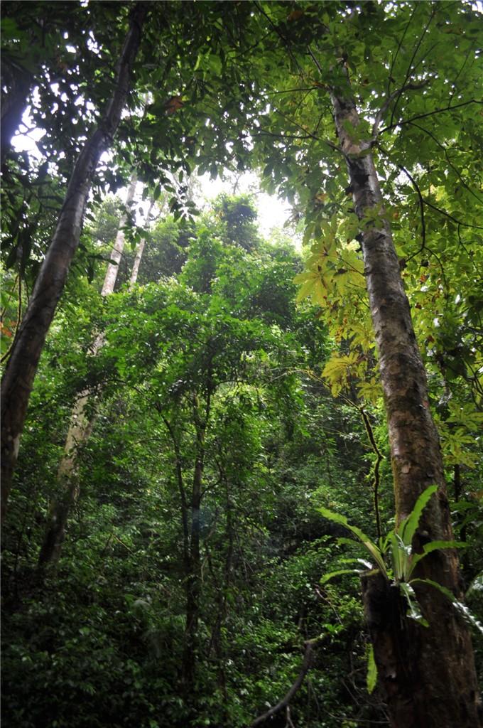 瑞丽:热带雨林