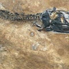 澳门网络下注赌场县发现一远古时代的大型化石群