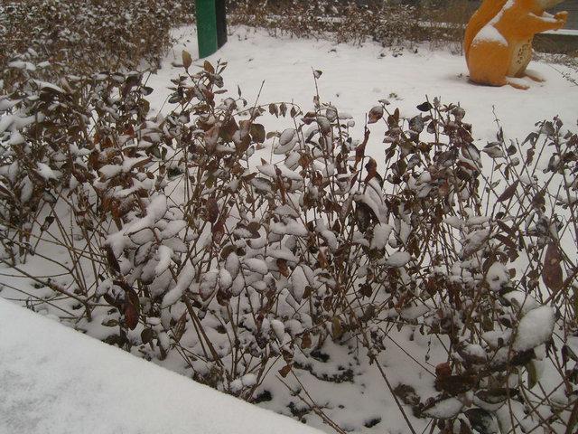 [贴图]家里下雪了