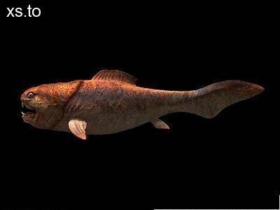 第七位:后鳄兽 富有冒险精神的节肢动物在丧失海洋霸权后开始了向