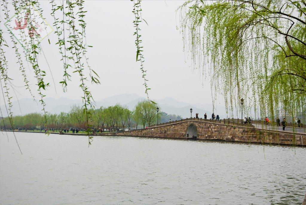壁纸 垂柳 风景 柳树 摄影 树 桌面 1024_685