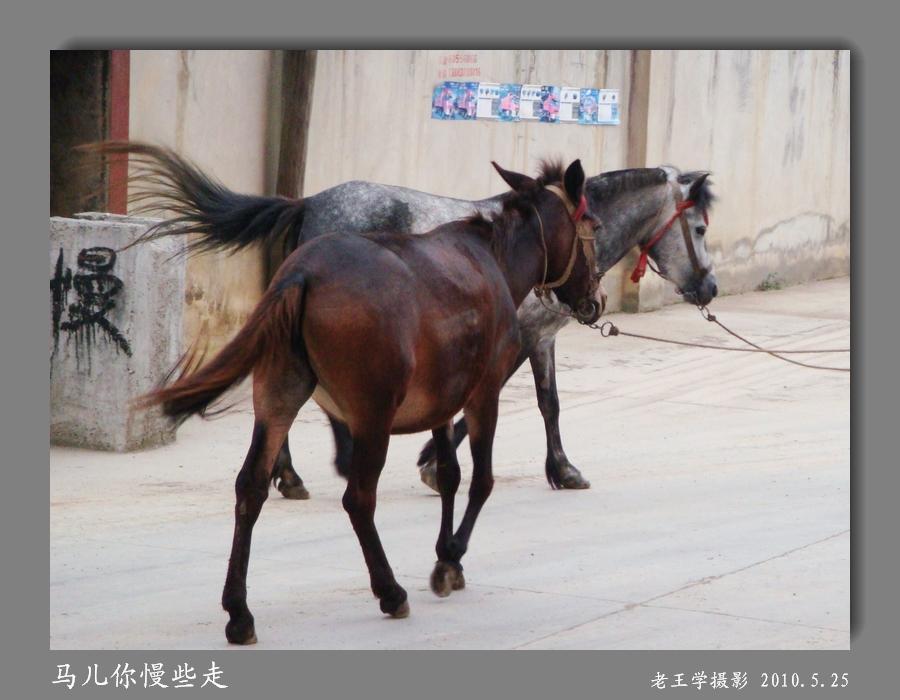 [原创]马儿你慢些走
