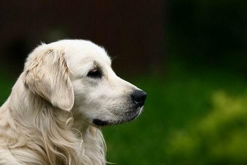 地震后,一只狗的感人故事