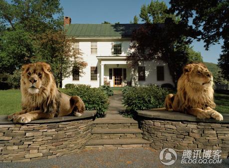 双狮!1!!!!!