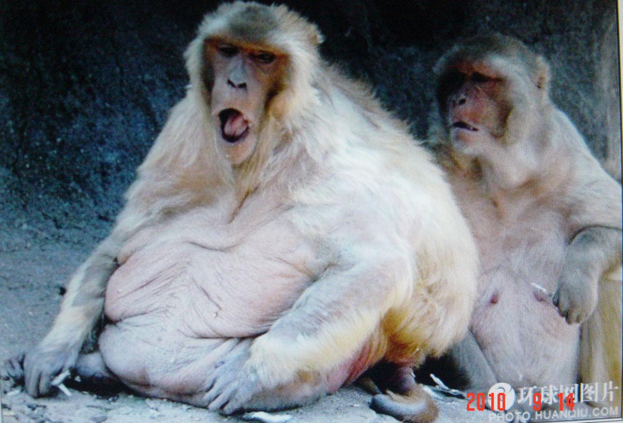 [转贴]世界十大最胖动物