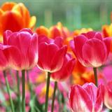 春暖花�_