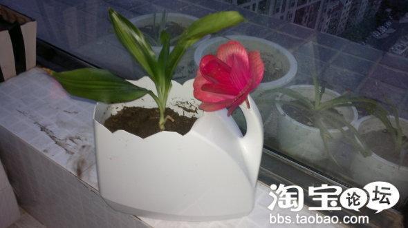 家庭装洗衣液瓶改装成花瓶