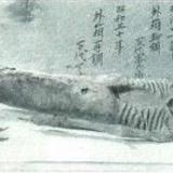 惊现真实美人鱼尸体 传说或为真(组图)