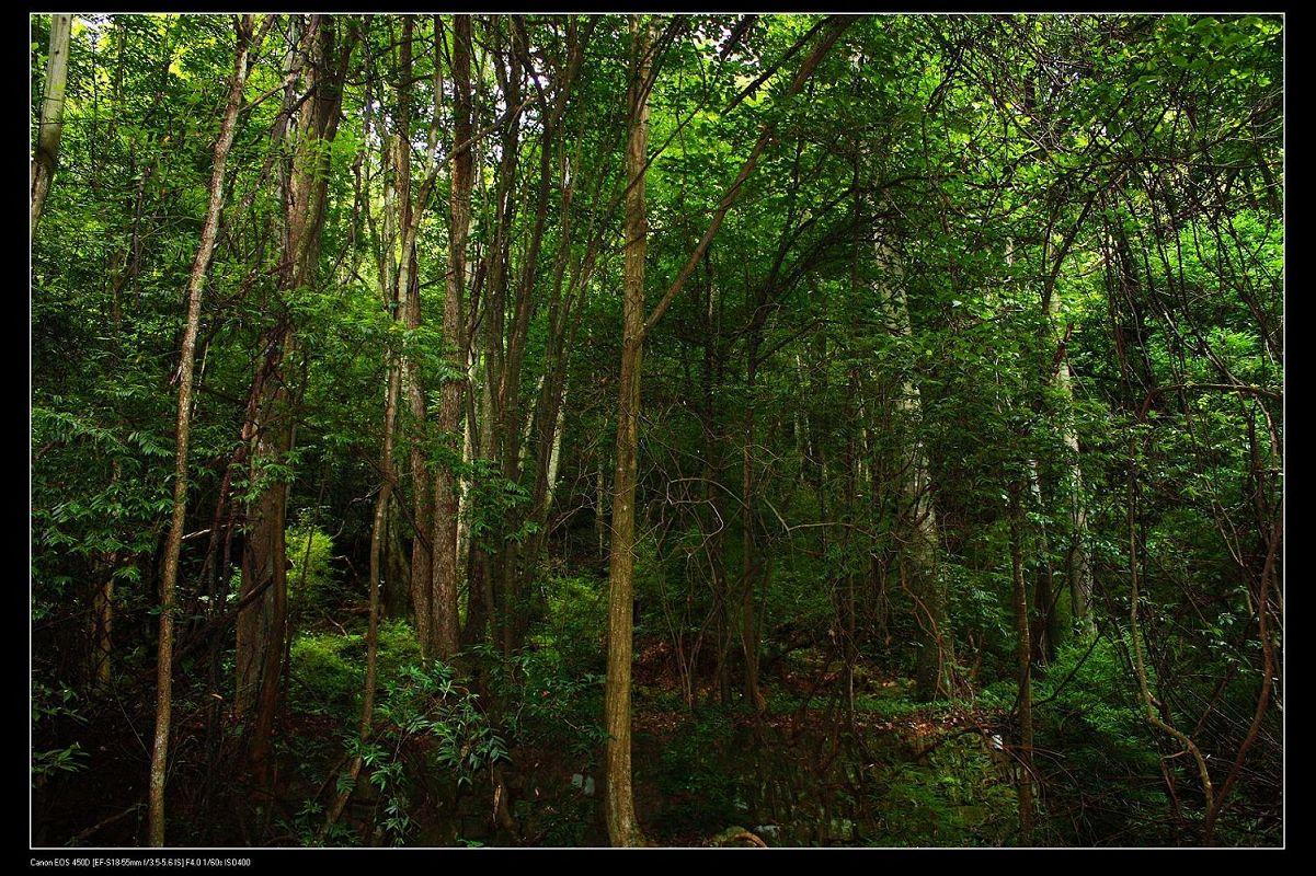 壁纸 风景 森林 植物 桌面 1201_800