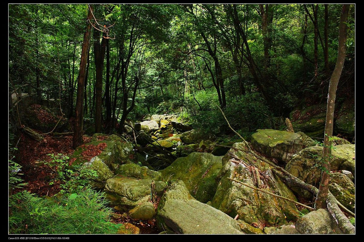 壁纸 风景 森林 桌面 1201_800