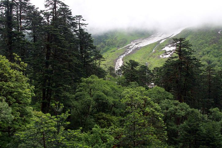 原始森林里,随处可见的折断的巨树