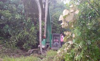新县附近一座山挖出140岁蛇精有图有真相