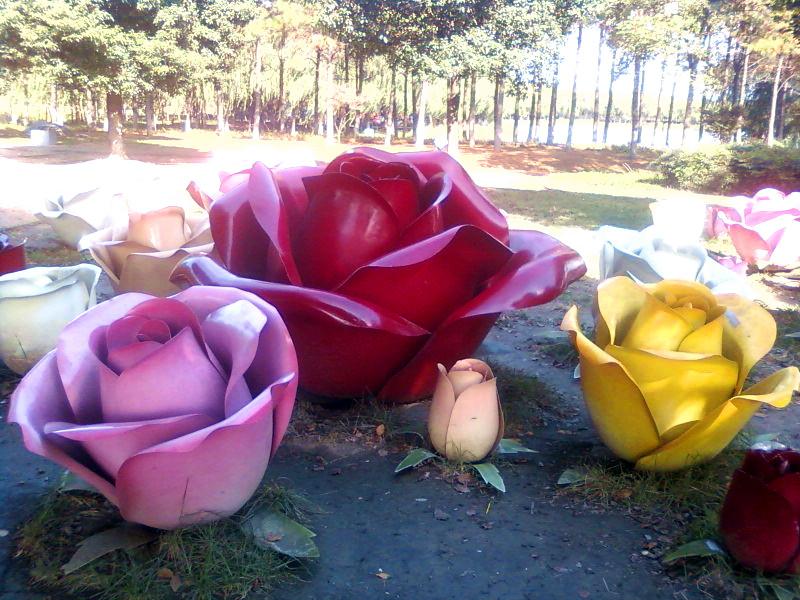 玫瑰花海,难道预示着爱情很快到来?