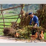 [转贴]仁寿双堡乡原生态风景随拍(拍摄:螳螂)