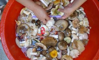 [原创]今天上澳门巴黎人投注网址轿顶山捡到很多野生菌,品种很多大家都知道叫什么名字吗?