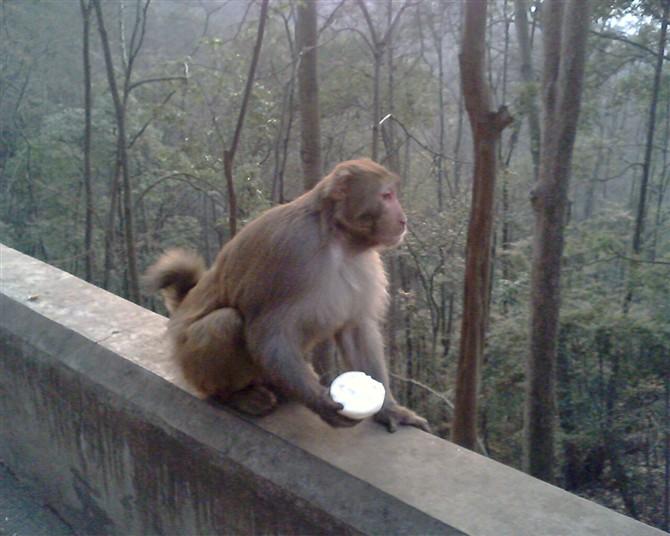 [原创]黔东南的猴