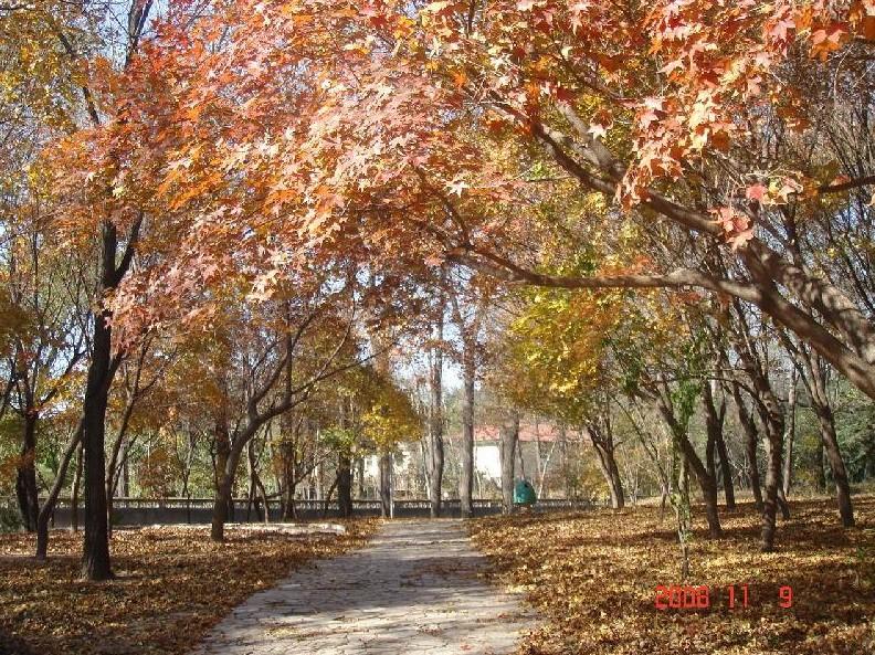 风景枫叶小路图片