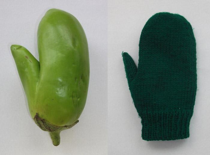 创意蔬菜图片,让网友们开开眼界。(6张)
