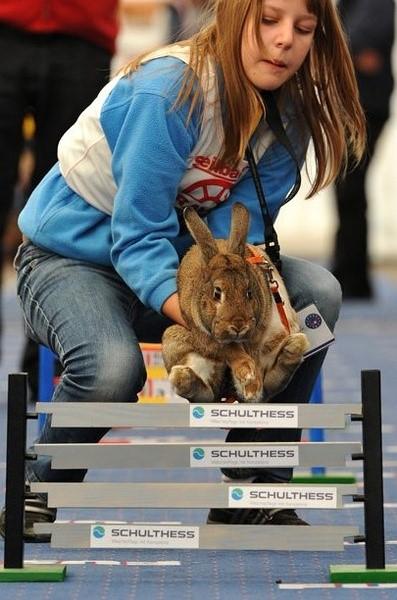 [分享]火爆话题  欧洲举行兔子大赛
