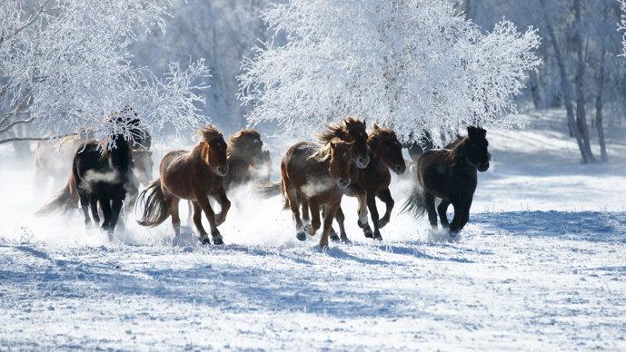 我喜欢哪些马哦