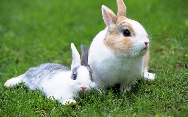 超多可爱的兔子