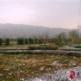 秦安的第一场雪