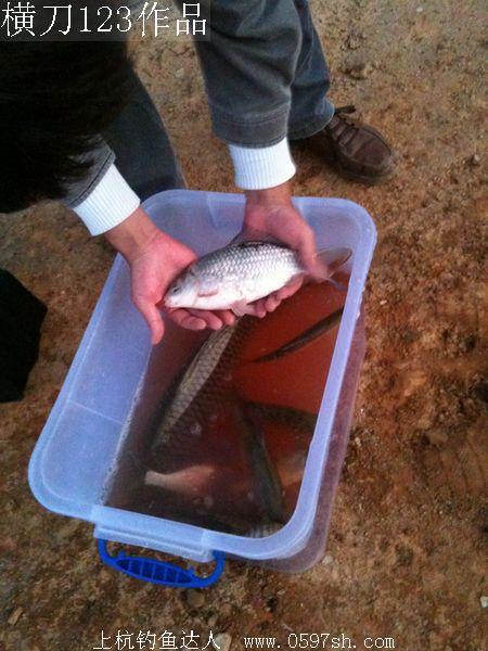 横刀作品(四):汀江河钓大鲤鱼