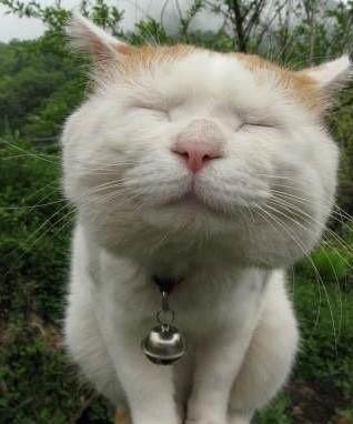 无敌可爱超萌的小猫猫.喜欢猫的朋友们请进.