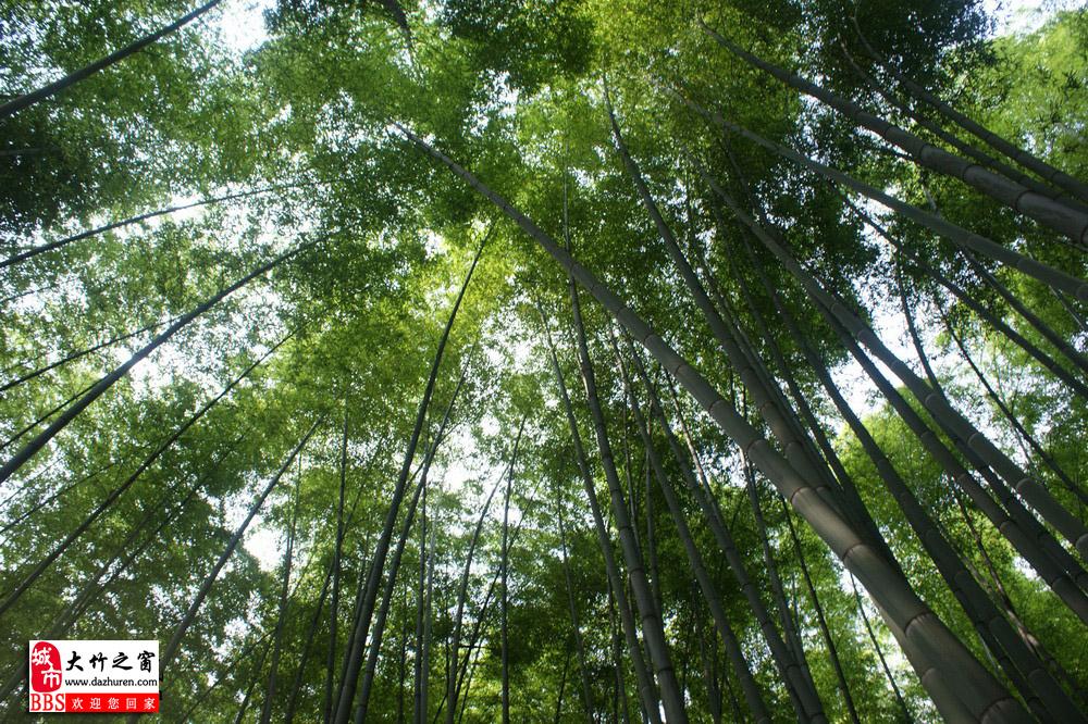 五峰山森林公园(川东竹海或大竹竹海)