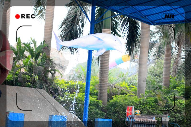 [原创]南宁动物园拍的海豚-飞起来的 呵呵