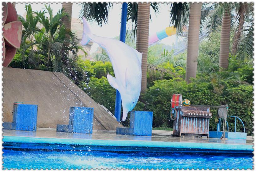 [原创]南宁动物园拍的海豚-飞起来的
