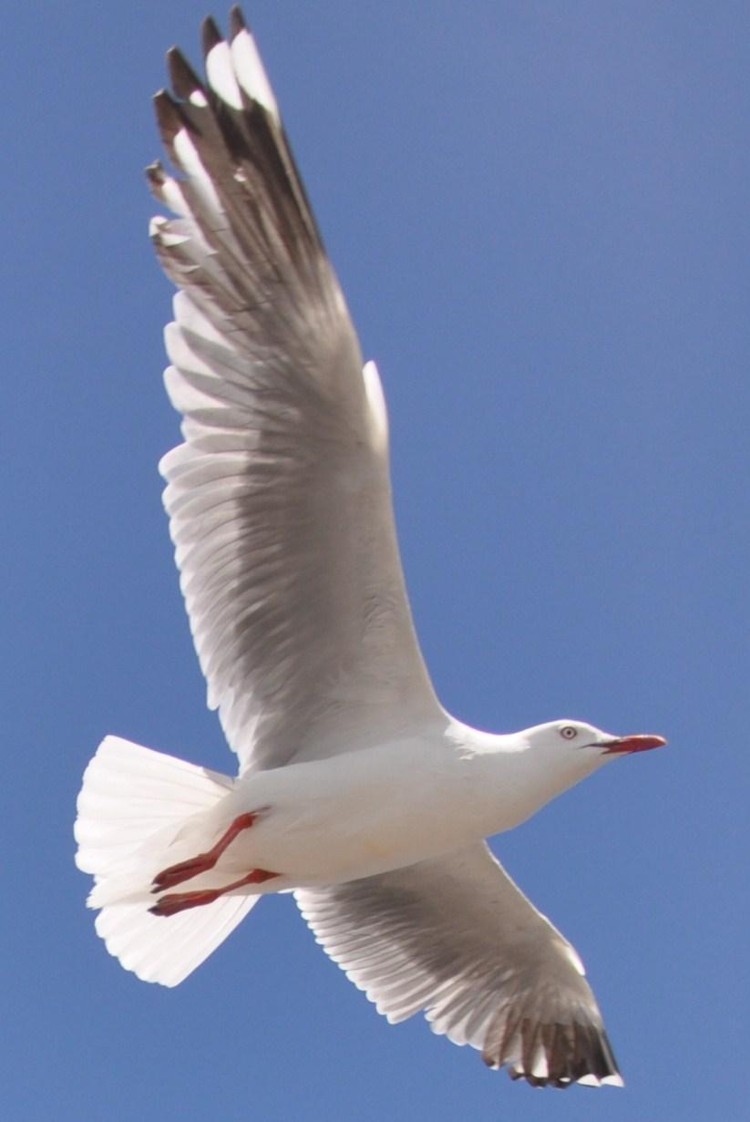天地一沙鷗(序幕) 喬納森儼如一只童話世界中的海鷗,他成長在傳統的海鷗家庭之中,但卻 表現的與眾不同,他從未把覓食作為學飛的惟一目的。因此,他甘願挨著 饑餓,義無反顧的忍受著一次次失敗與創傷所帶來的痛苦,去專心致志的 學習飛翔。在喬納森的心中,活著已經沒有別的意義,理想就是飛的更快、 更高、更完美,他認為速度就是力量, 就是快樂, 就是完整的美,就是 生命的一切。  登录/注册后可查看大图