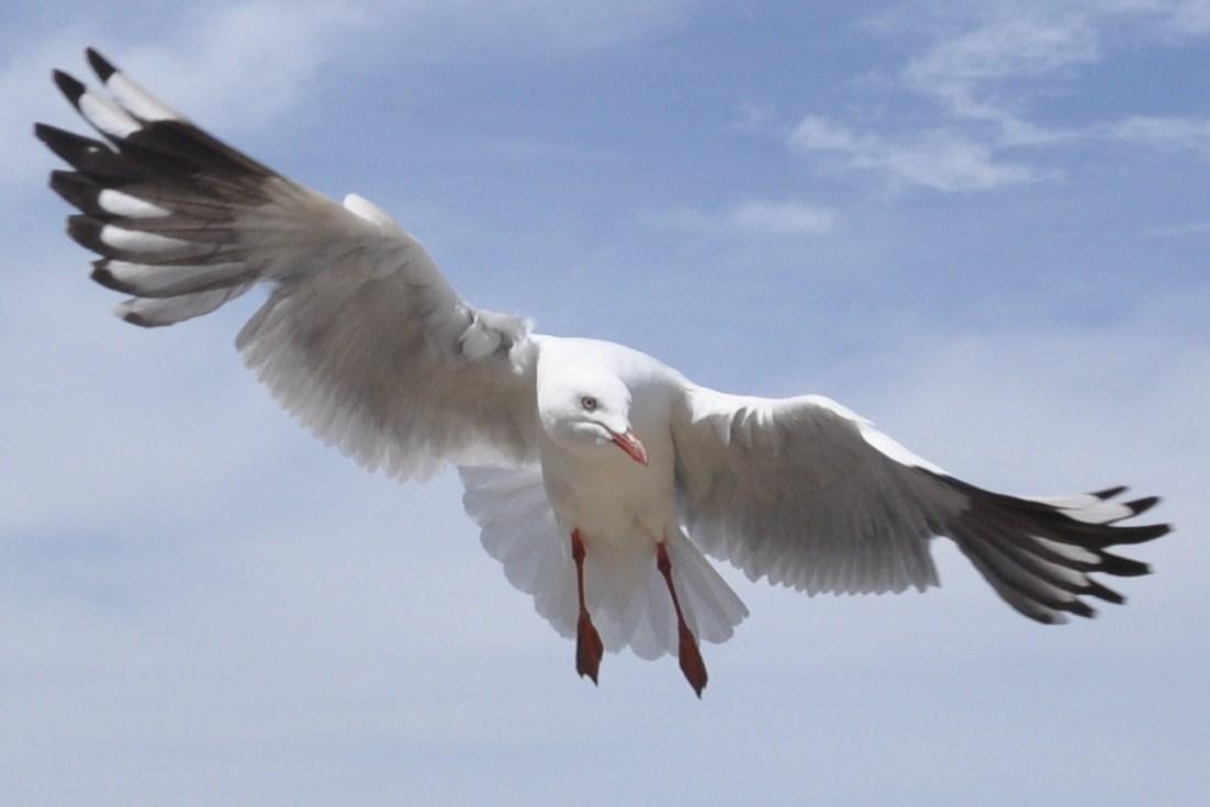 飞行速度最快的动物