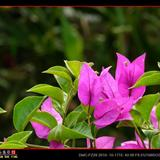 阿春花卉相册