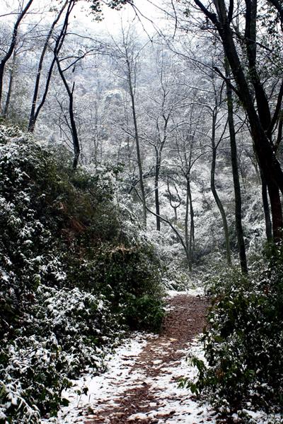 [原创]春雪