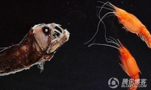 世界15种相貌奇特生物