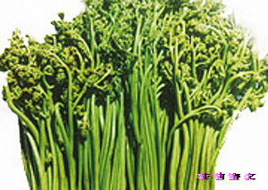 [转贴]癌症终于有克星了:十种野菜让你不得癌,治好癌!