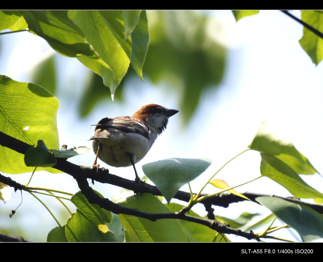 [原创]春天的小鸟