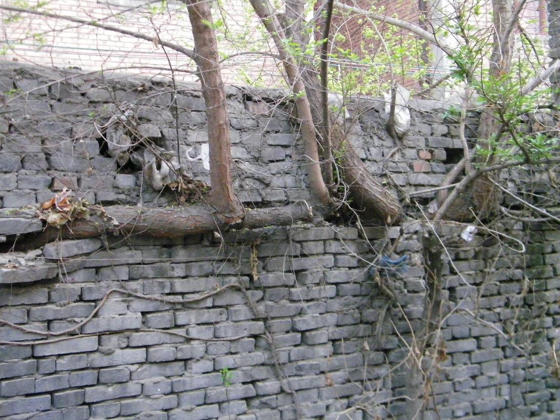 [原创]生命的力量-墙缝里长出大树来