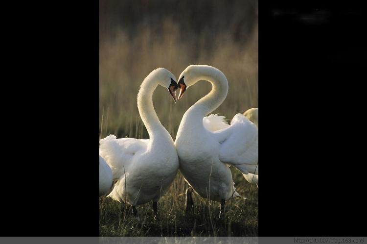 野生动物的唯美爱情